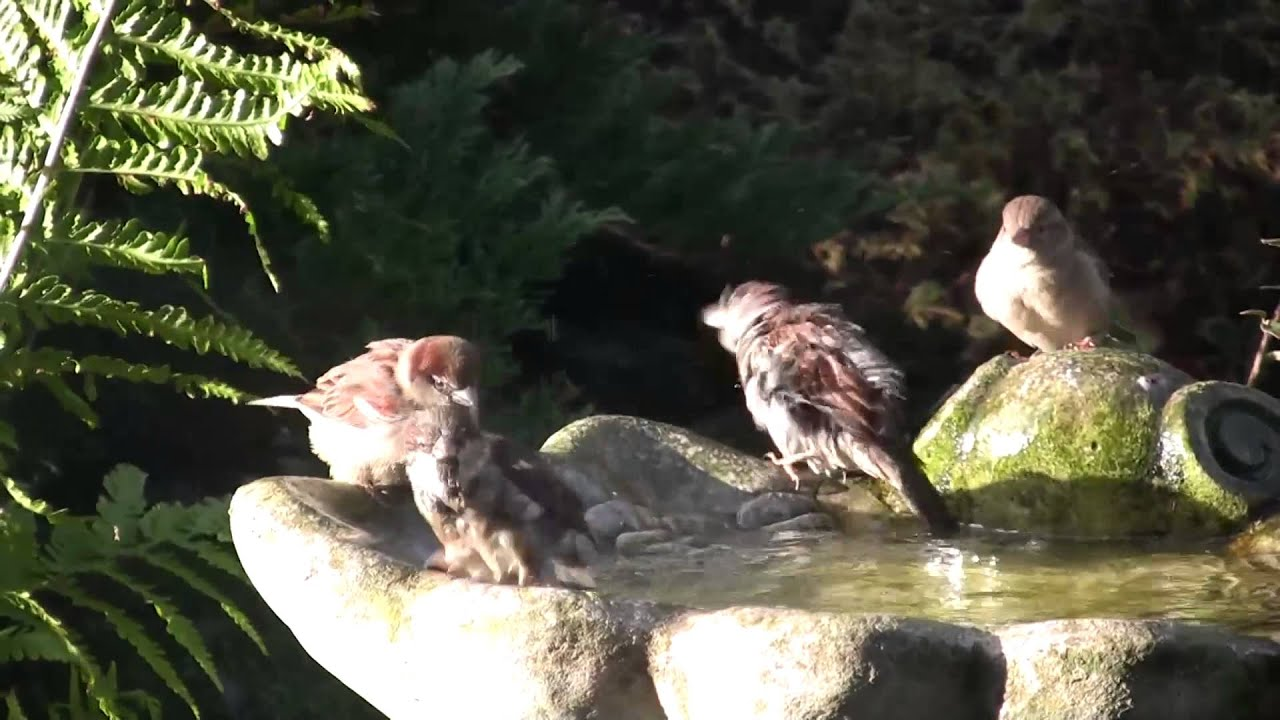 attracting birds to your garden with running water youtube