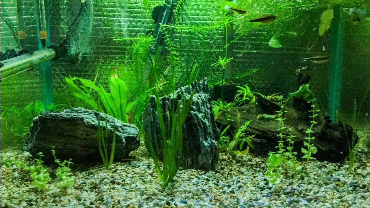 Buy Aquarium Plants Canada
