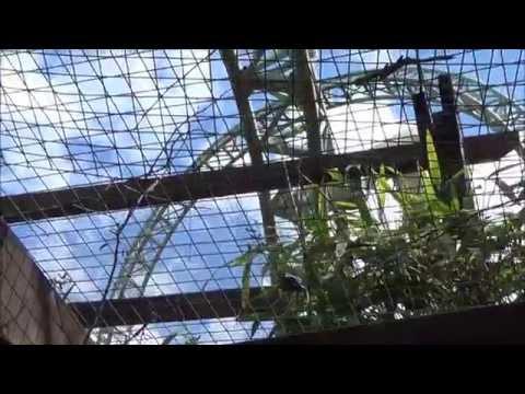 Thorpe Park 6th May 2014 Vlog