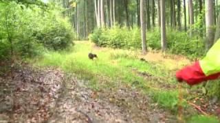 Barbara Schäfers Hundeschule - Schweißarbeit Mit Tiroler Bracken