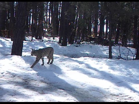 Best of Game Cam/Trail Cam