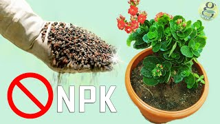 NEVER USE NPK DAP UREA - 5  HAZARDS OF CHEMICAL FERTILIZER PESTICIDE in Gardening & Farming