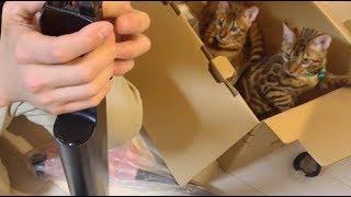 New掃除機を組み立てる僕を邪魔するベンガル猫一家