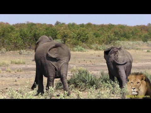 Enjoy The Elephant Walk thumbnail