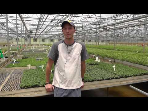 Internship in greenhouse in the USA arranged by The Ohio Program
