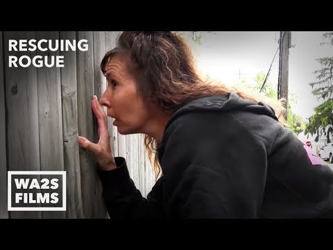 Thumbnail: Suspected Dog Fighter Confronted About Puppy Caged in the Rain #11 Rescuing Rogue w Detroit Pit Crew
