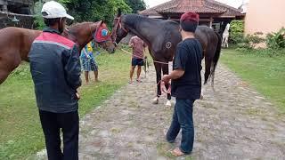 Kawin Kuda