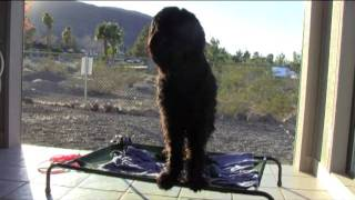 Dog Training In Las Vegas-black Russian Terrier-a Very Useful Command
