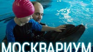 Плавание с дельфинами в Москвариум(Москвариум - плавание с дельфинами. Заказать видеосъемку http://boyko.video Заказать фотосъемку http://boyko.video ВДНХ,..., 2016-12-12T16:30:54.000Z)