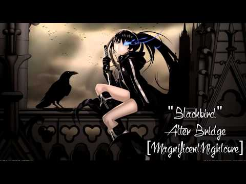 Nightcore - Black Bird