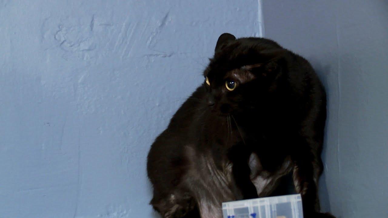 Jackson galaxy recounts his hellish experience with may for Jackson galaxy cat toys australia