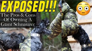 GIANT SCHNAUZER PROTECTION DOGS  The Pros and Cons #GiantSchnauzer #ProtectionDog