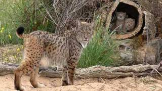 cmm video sobre animales en peligro de extincin