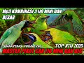 Cucak Ribut  Suara Cucak Rante Ijo Mini Dan Ijo Besar  Mp3 - Mp4 Download