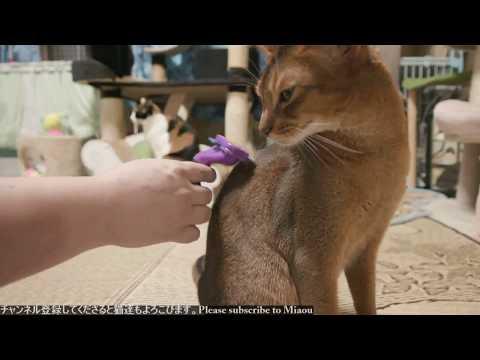 2018.7.31 猫日記ブラッシング   Cats & Kittens room 【Miaou みゃう】