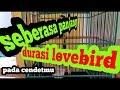 Cendet Gacor Isian Cililin Dan Lovebird Kicau Ocehan  Mp3 - Mp4 Download