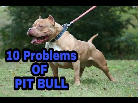 10 Problems OF PIT BULL in hindi || problems of dogs ||