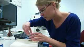 Occupational Video - Petroleum Geologist