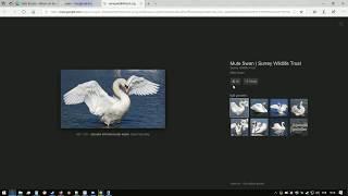 NGU Idle Asshole Swan