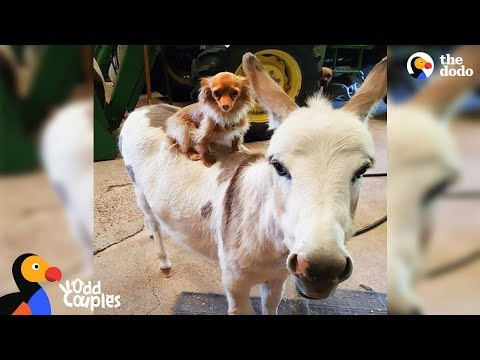 Dog Just Wants His Donkey Friend To Be Happy   The Dodo Odd Couples