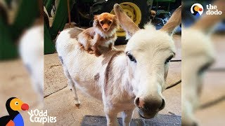 Dog Just Wants His Donkey Friend To Be Happy | The Dodo Odd Couples