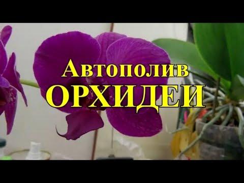 Авто полив орхидеи