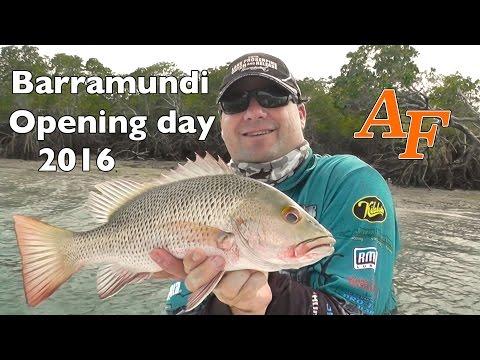 Barramundi Opening Day 2016 fishing Andy's Fish Video EP.300