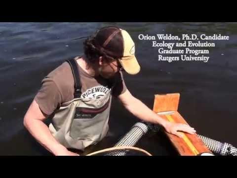 Raritan River Fish Passage & PIT Tagging Study