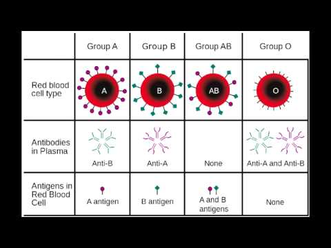 Blood Type Chart Facts and Information on Blood Group Types