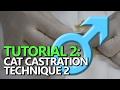 TUTORIAL 2: Male Cat Castration - Using a hemostat