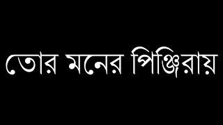 Jisan Khan Shuvo | Tor Moner Pinjiray | তোর মনের পিঞ্জিরায় | Bengali Song | Cornelius