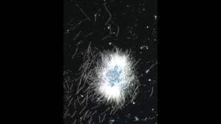 Lyme spirochete: borrelia biofilm