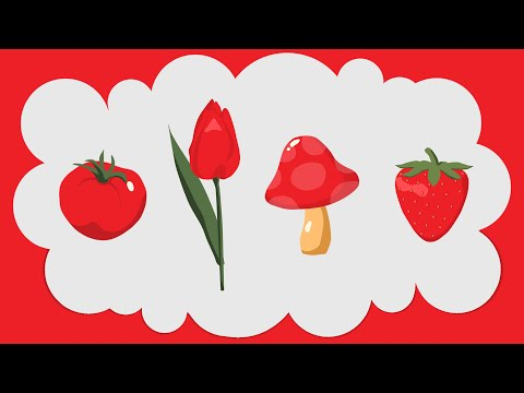 Сорт сливы Скороплодная: фото, отзывы, описание