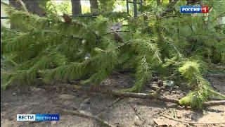В Костроме вторые сутки устраняют последствия урагана