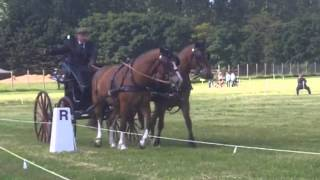 Attelage dressage paire chevaux