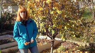 Опавшие листья. Убирать или нет?