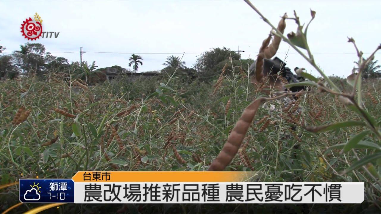 樹豆好營養! 農改場推休耕地種植 2015-01-08 TITV 原視新聞 - YouTube