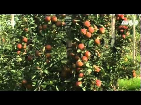 VTC14_Nghệ thuật kinh doanh của các nhà vườn trồng táo ở Đức_10.09.2013