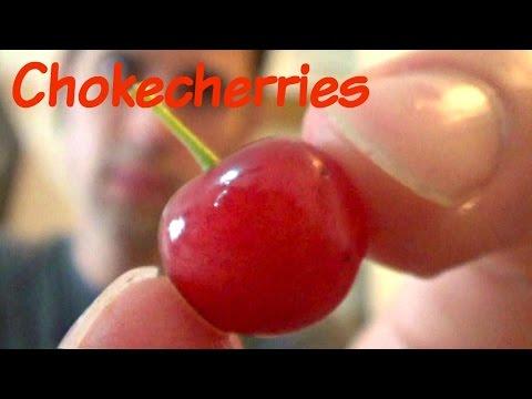 Chokecherries Review And Juice Recipe - Weird Fruit Explorer Ep. 111