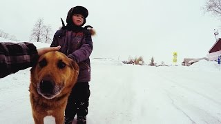 Собаки спасают Людей-люди убивают Собак. | SEVEN MONKEYS