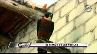 Punto Final: El criadero de águilas más grande del mundo está en Perú