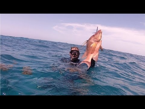 Spearing Giant Hogfish And Grouper In Florida Keys!