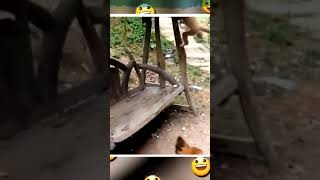 Best Mising dubbed funny video Monkey vs Dog