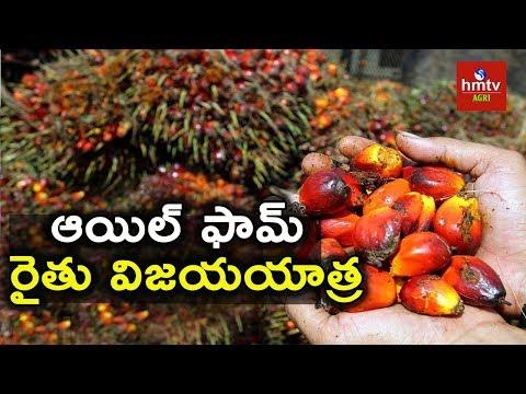 Oil Palm(Palm Oil) Cultivation - Experience Of A Successful Farmer | hmtv Agri