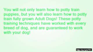How To Potty Train An  Month Old Dog