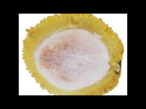 El Ocoró, fruto exótico de Santa Cruz Bolivia