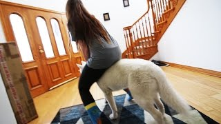 SHE IS RIDING MY DOG LIKE A HORSE!