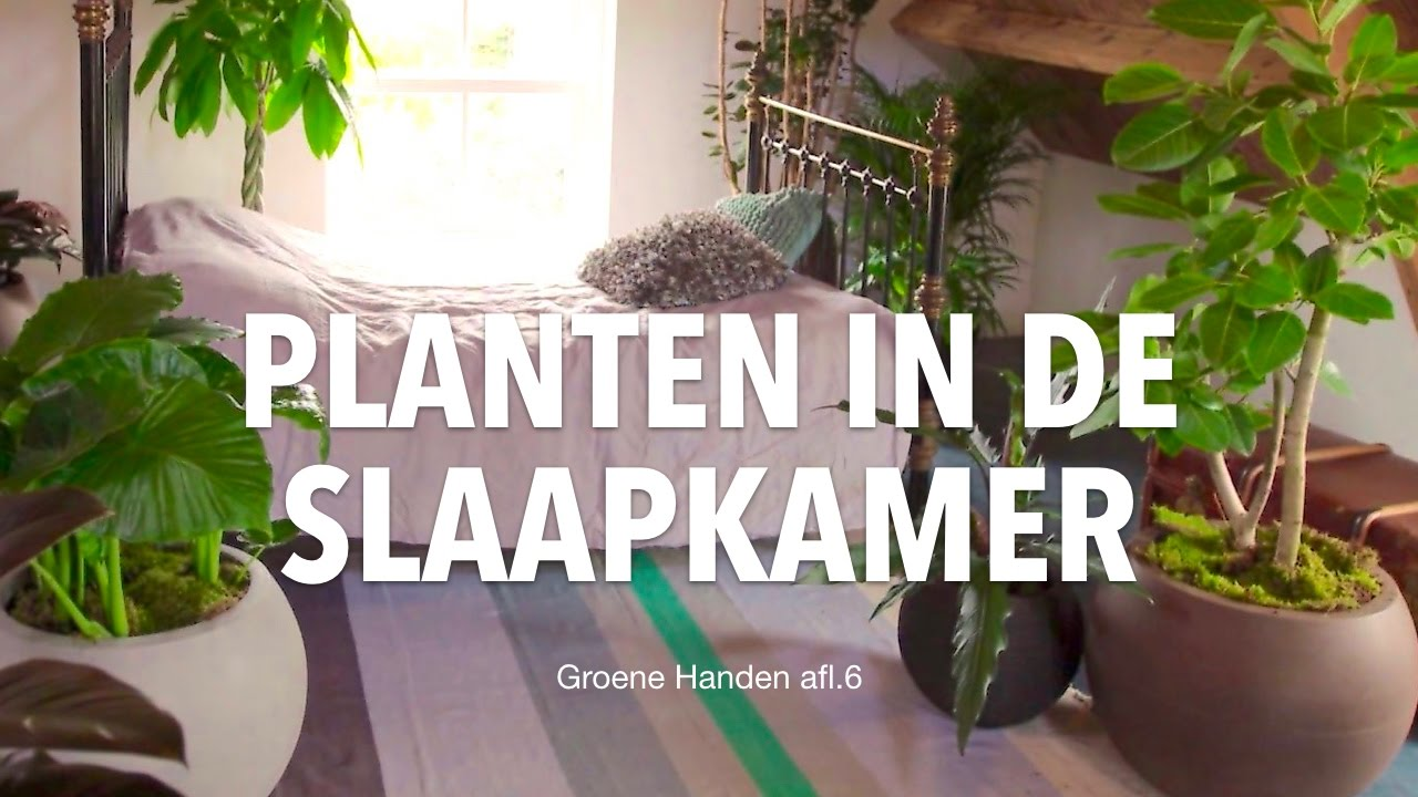 Slaapkamerplanten: wakker worden in de jungle! - YouTube
