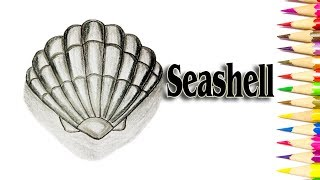How to Draw a Seashell for Beginners - Step by Step Drawing - SLD