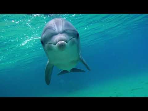 L'uomo delfino (trailer italiano)